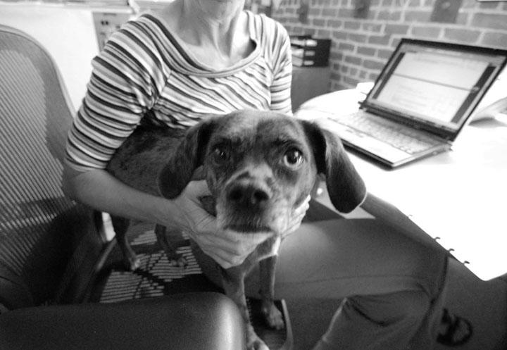 Millón y medio de norteamericanos llevan sus perros a la oficina