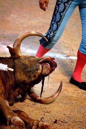 toros-tradicion-animalistas-criticas-maltratoanimal-revista-achtung-2
