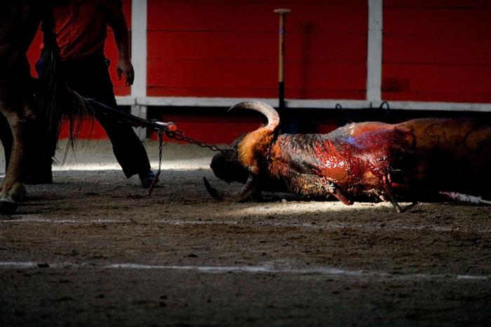 toros-tradicion-animalistas-criticas-maltratoanimal-revista-achtung