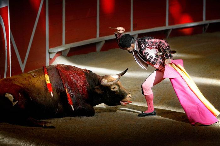 """Toros: """"Tradición = maltrato animal"""""""