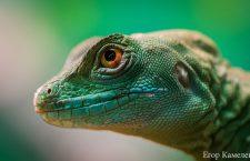 Javier Medina Bernal y Lagarto Rey: el reptil borracho en el ojo del escritor