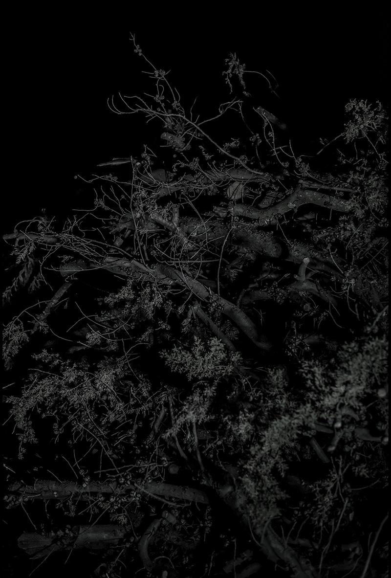 O brúo do bosque doente síntese en Phekda!