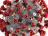 Coronavirus: Conocimientos básicos y medidas de prevención.