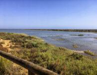 Playas y mascotas: El Espigón de Huelva